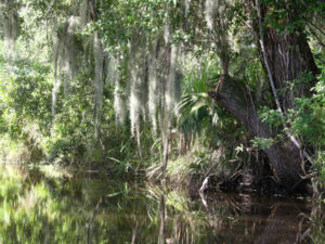 Fort Myers Film Production_mangroves
